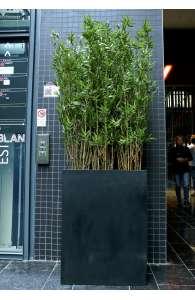 Plantes d'intérieur - Bac séparateur Bambous
