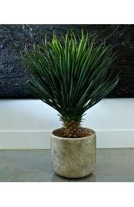 Plante semi naturelle - Le Yucca