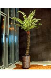 Plante semi naturelle - Larbre fougère