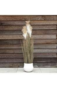 Plante semi naturelle - La PAMPA