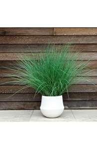 Plante artificielle - La Graminée